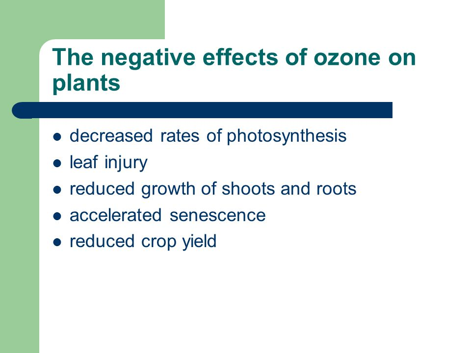 The negative effects of ozone on plants
