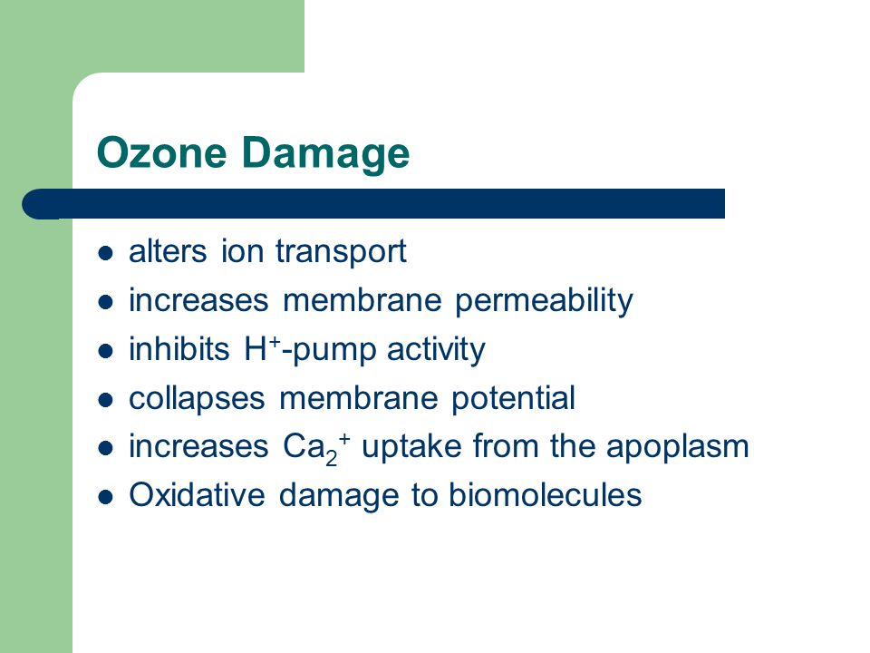 Ozone Damage alters ion transport increases membrane permeability