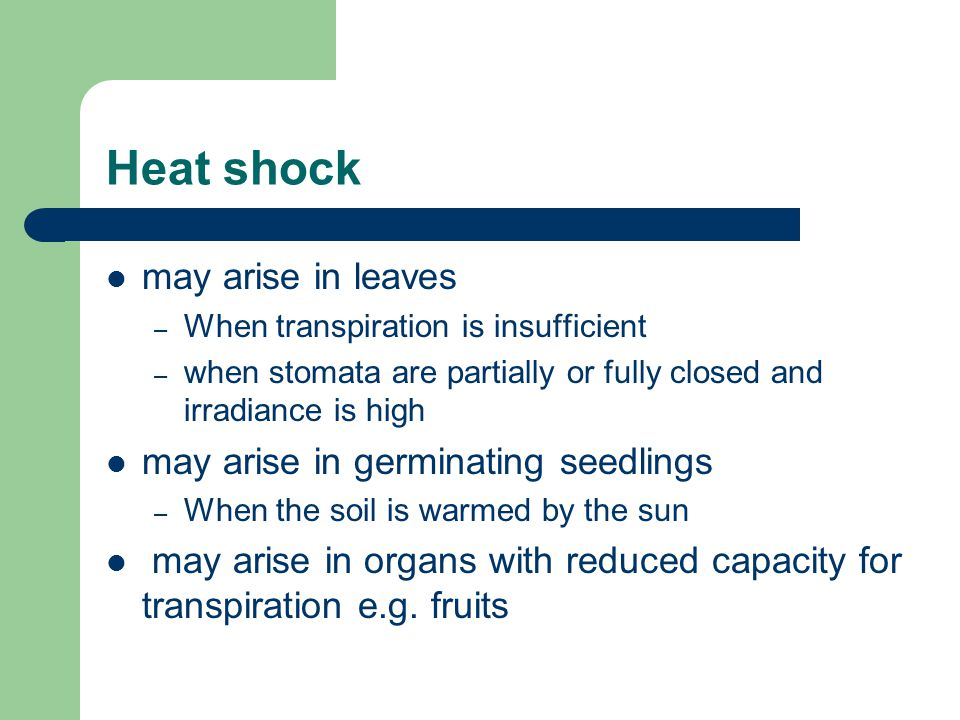 Heat shock may arise in leaves may arise in germinating seedlings