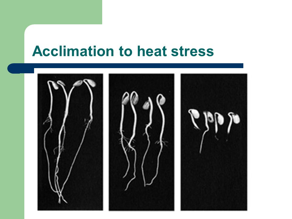 Acclimation to heat stress