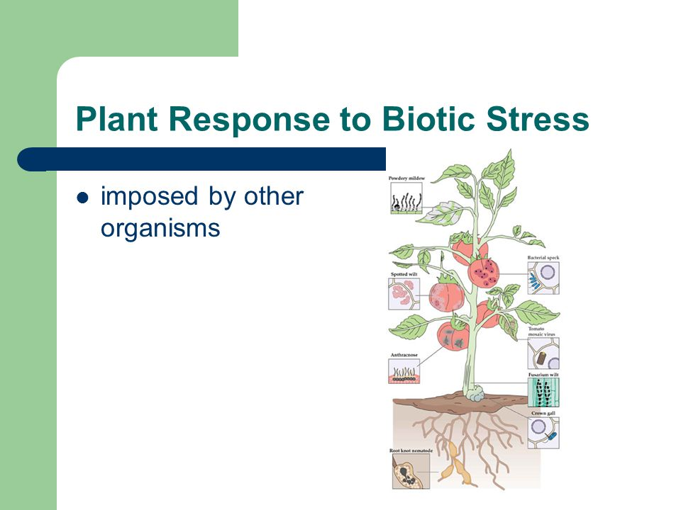 Plant Response to Biotic Stress