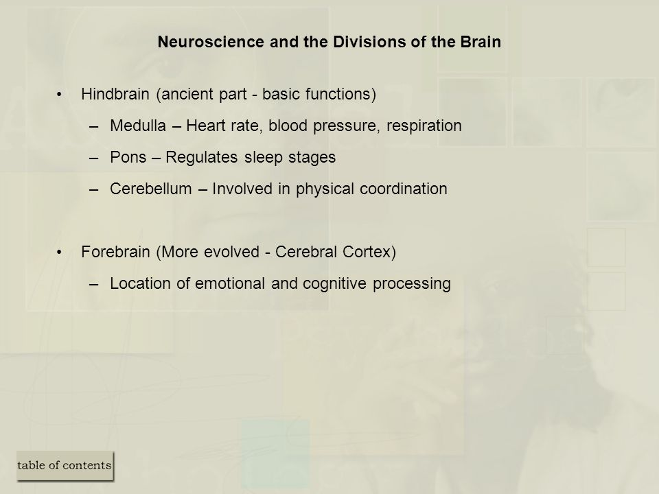 Neuroscience and the Divisions of the Brain