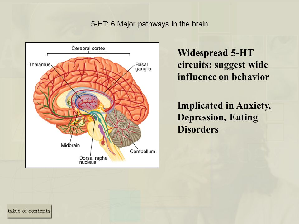 5-HT: 6 Major pathways in the brain