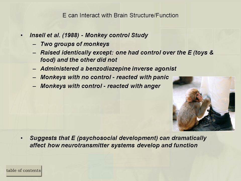 E can Interact with Brain Structure/Function