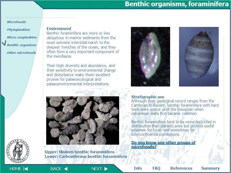 download Organische Chemie: Chemie — Basiswissen II