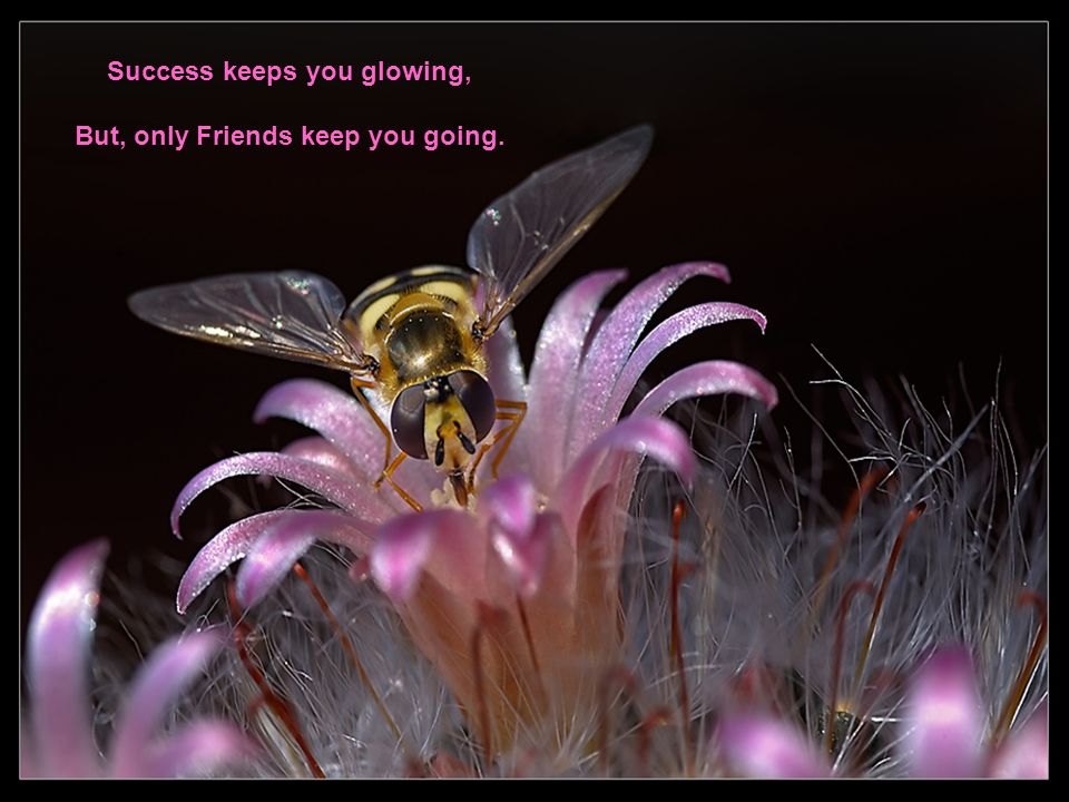 Success keeps you glowing, But, only Friends keep you going.