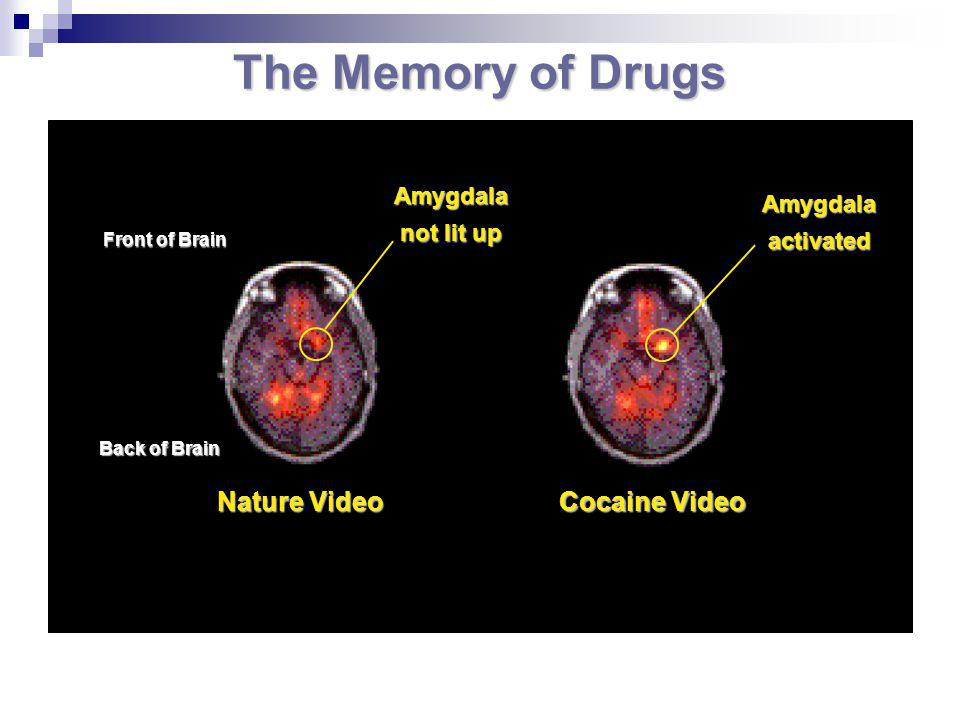 The Memory of Drugs Nature Video Cocaine Video Amygdala not lit up