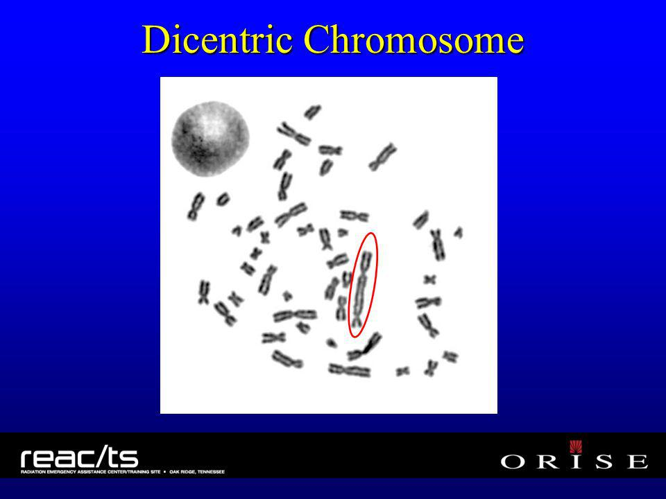 Dicentric Chromosome
