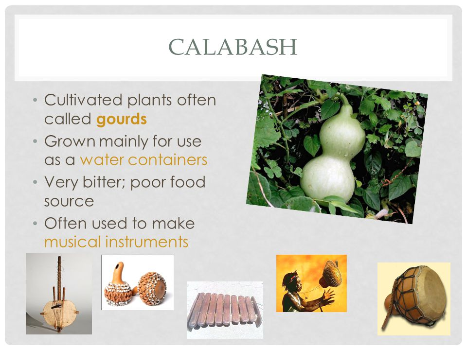 calabash Cultivated plants often called gourds