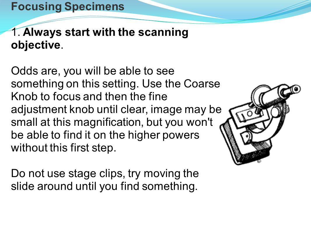 Focusing Specimens 1. Always start with the scanning objective.