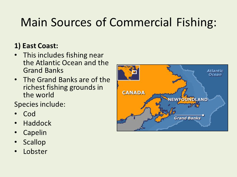 an introduction to the analysis of commercial fishing Advertisement analysis essay 1 i ask them to use the following sentence to structure their advertising analysis essay: sporty automobiles, hunting and fishing, politics, scientific and technological breakthroughs, workplace guidance, travel and tourism, and.