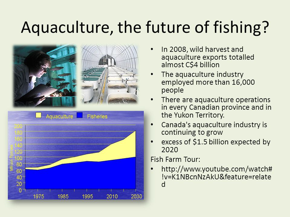 Aquaculture, the future of fishing