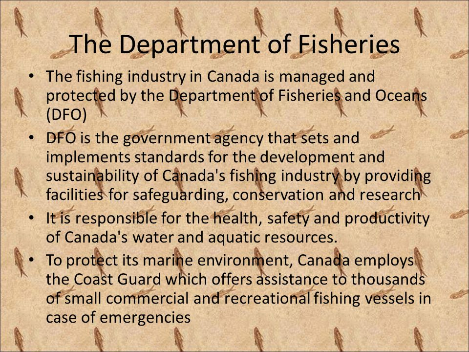 The Department of Fisheries