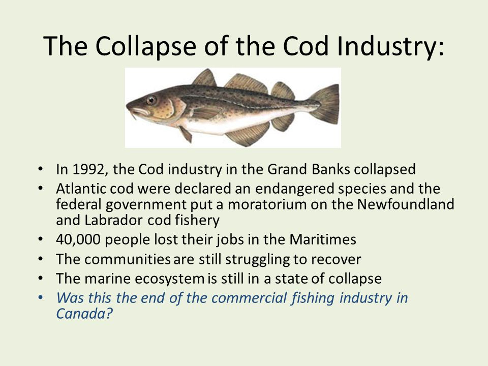 The Collapse of the Cod Industry: