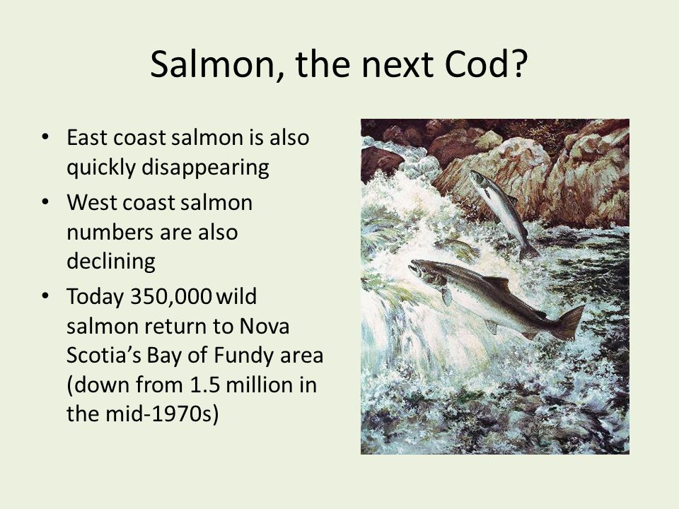 Salmon, the next Cod East coast salmon is also quickly disappearing