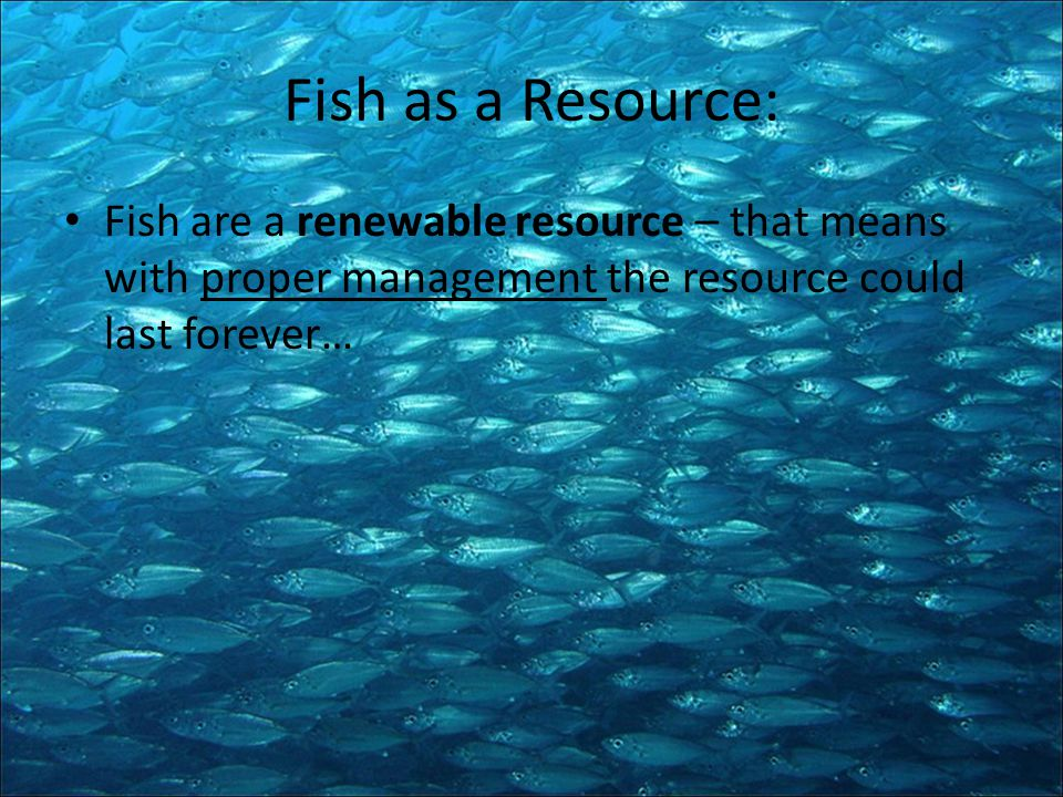 Fish as a Resource: Fish are a renewable resource – that means with proper management the resource could last forever…