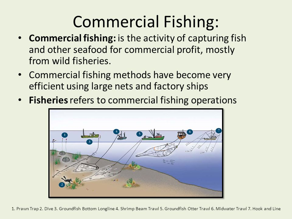 Commercial Fishing: Commercial fishing: is the activity of capturing fish and other seafood for commercial profit, mostly from wild fisheries.