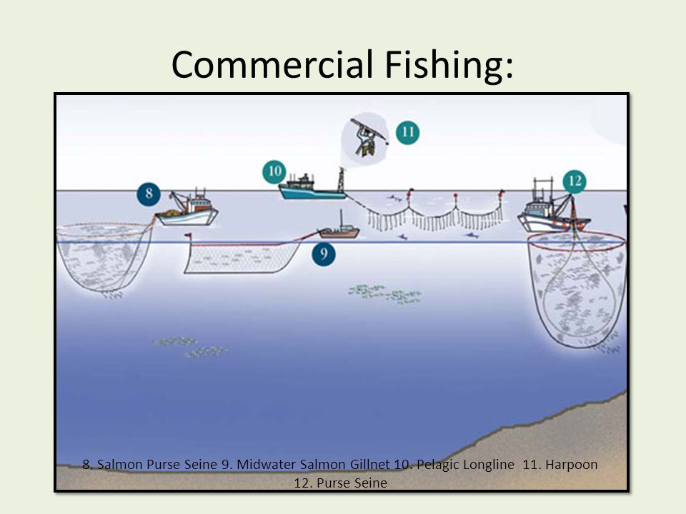 Commercial Fishing: 8. Salmon Purse Seine 9. Midwater Salmon Gillnet 10. Pelagic Longline (swordfish longline) 11. Harpoon (swordfish harpoon)