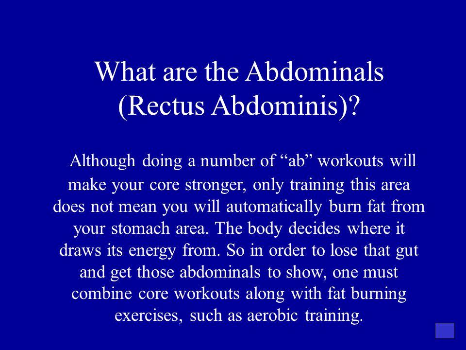 What are the Abdominals (Rectus Abdominis)