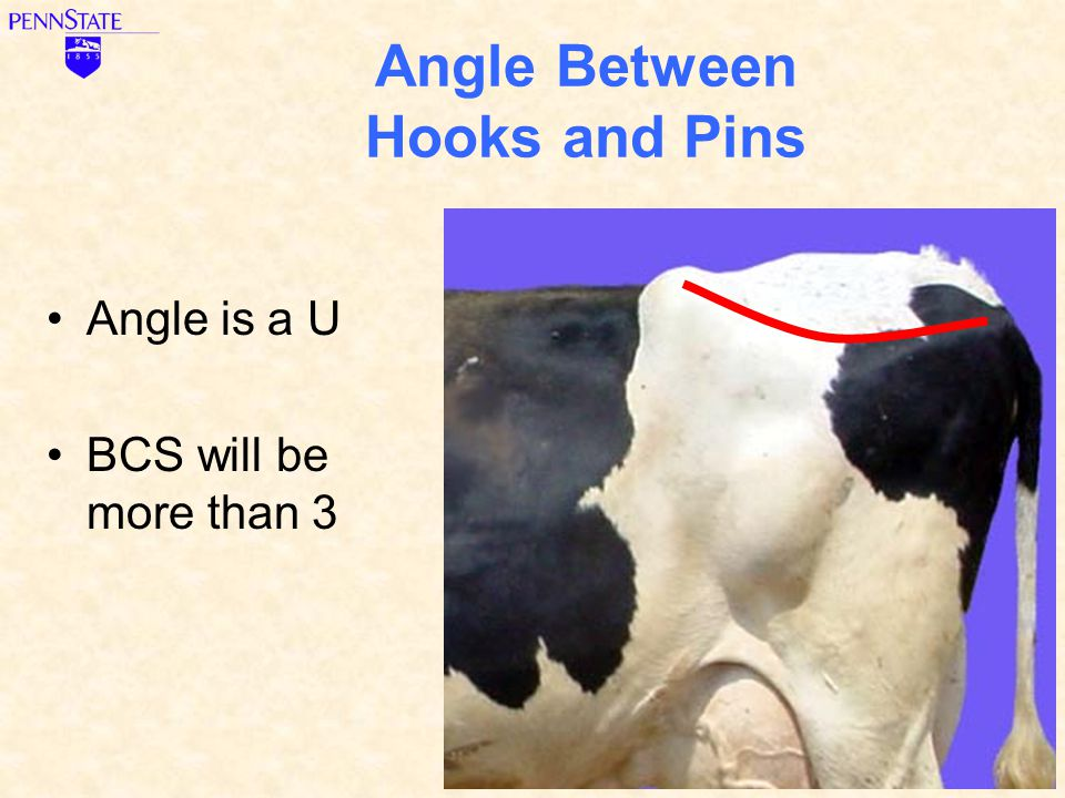 Angle Between Hooks and Pins