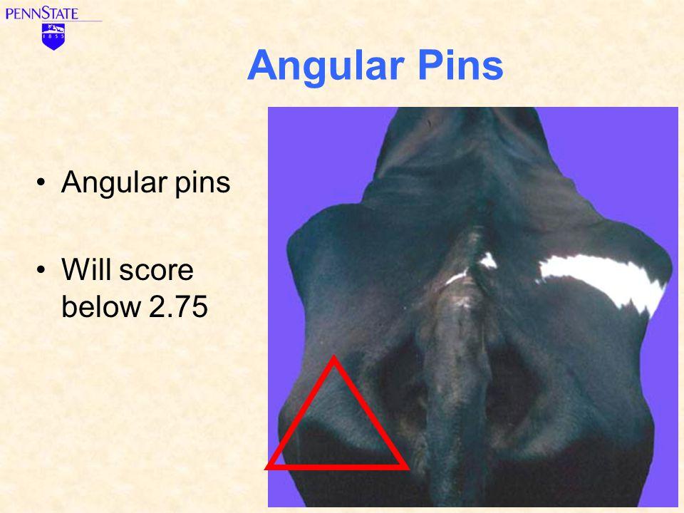 Angular Pins Angular pins Will score below 2.75