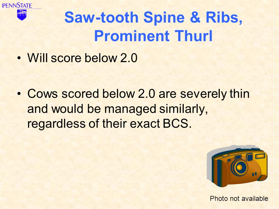 Saw-tooth Spine & Ribs, Prominent Thurl