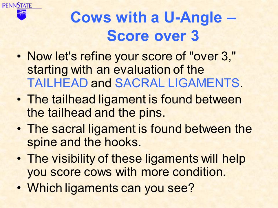 Cows with a U-Angle – Score over 3