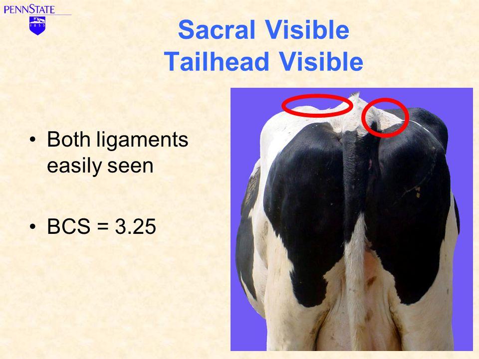 Sacral Visible Tailhead Visible