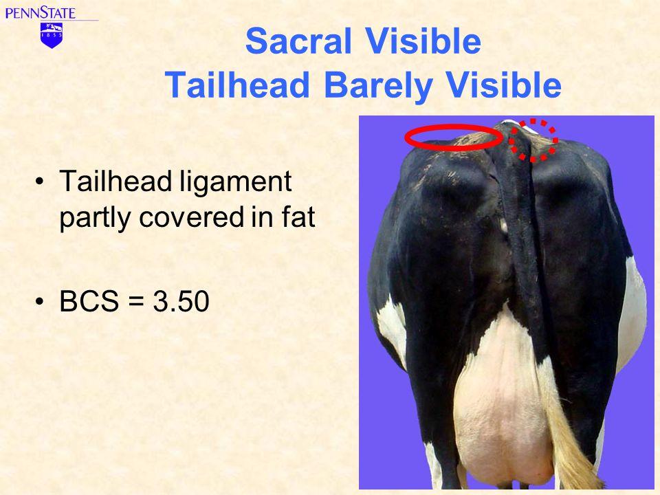 Sacral Visible Tailhead Barely Visible