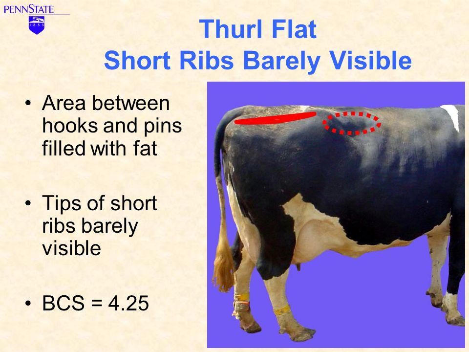 Thurl Flat Short Ribs Barely Visible