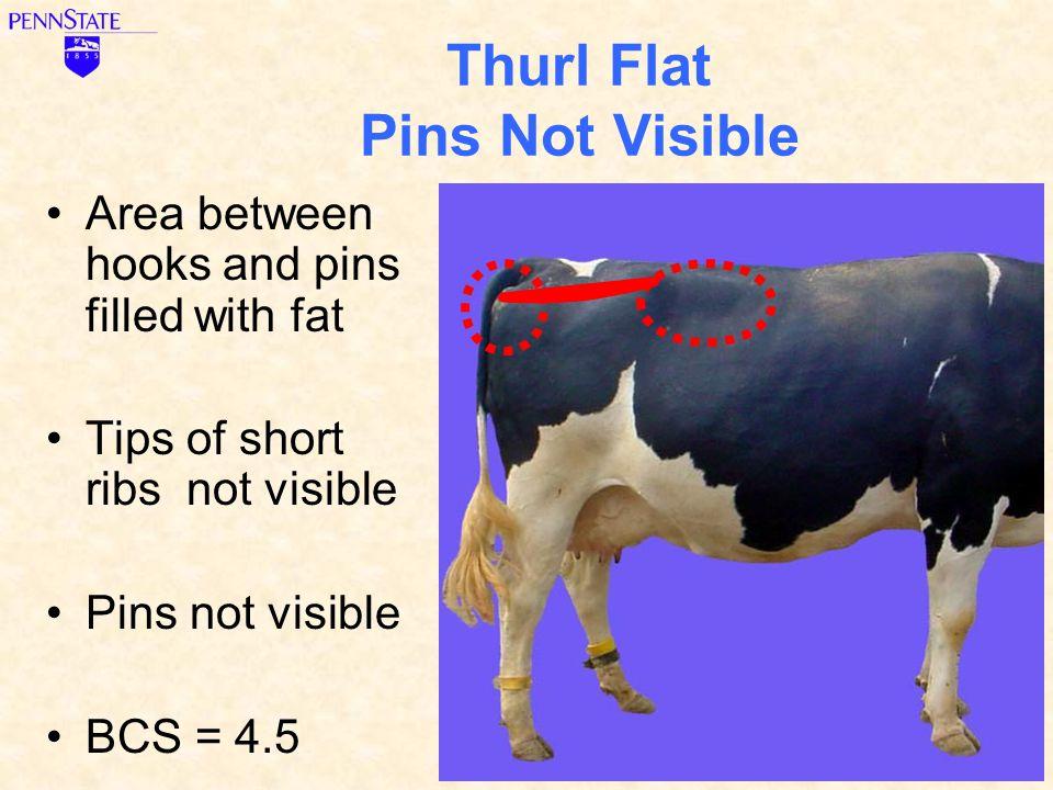 Thurl Flat Pins Not Visible
