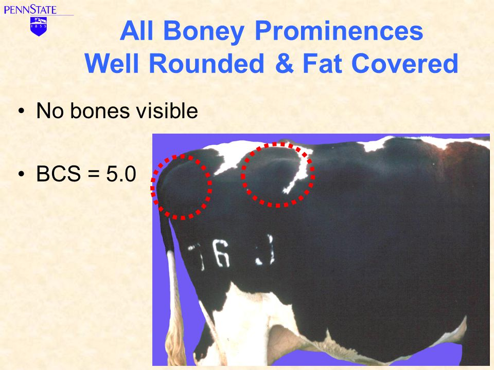 All Boney Prominences Well Rounded & Fat Covered