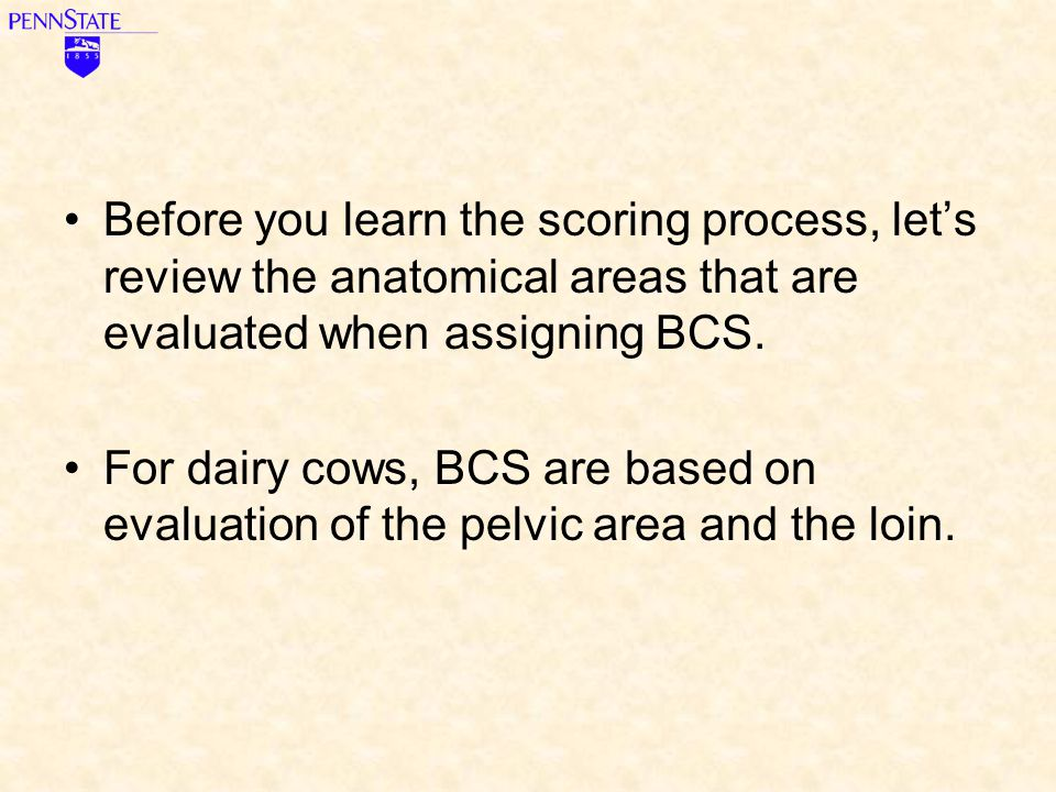 Before you learn the scoring process, let's review the anatomical areas that are evaluated when assigning BCS.