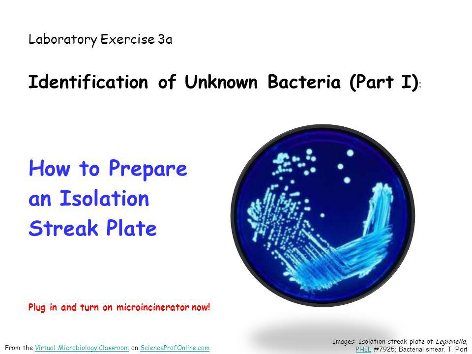 How to Prepare an Isolation Streak Plate