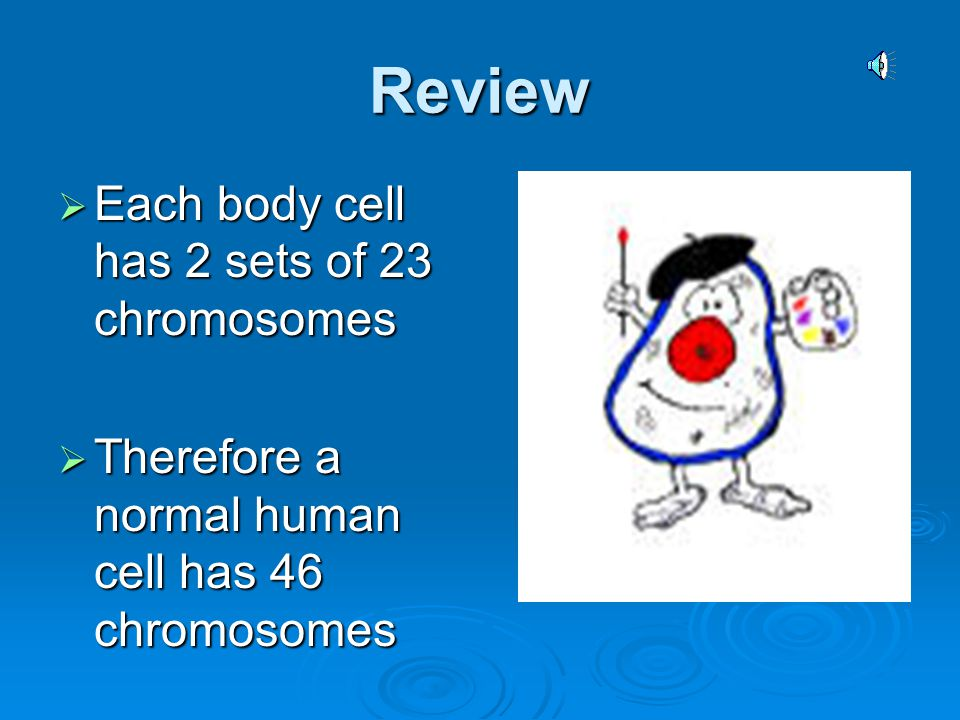 Review Each body cell has 2 sets of 23 chromosomes