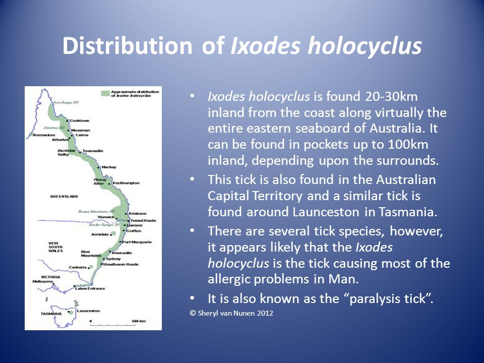 Distribution of Ixodes holocyclus