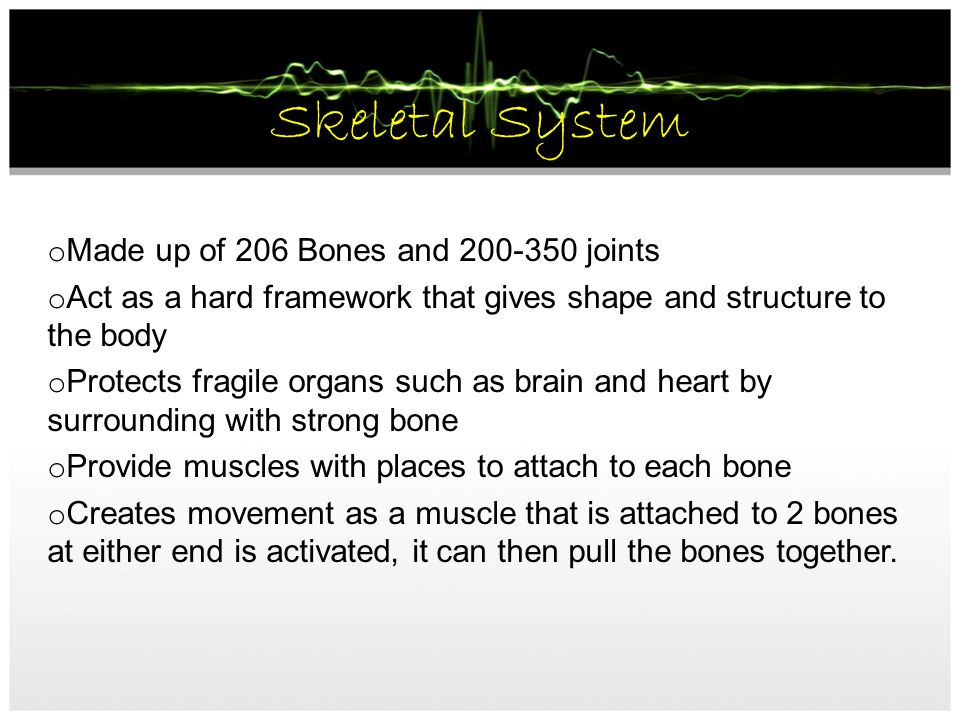 Skeletal System Made up of 206 Bones and joints