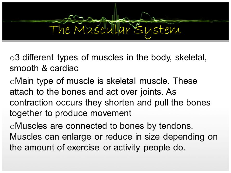 The Muscular System 3 different types of muscles in the body, skeletal, smooth & cardiac.