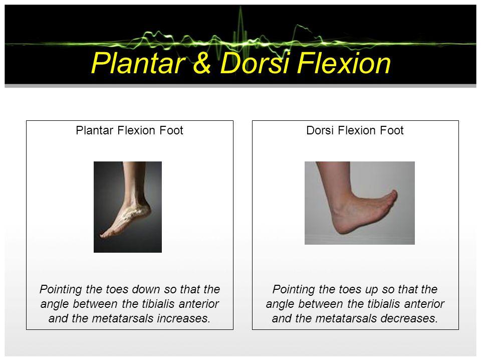Plantar & Dorsi Flexion