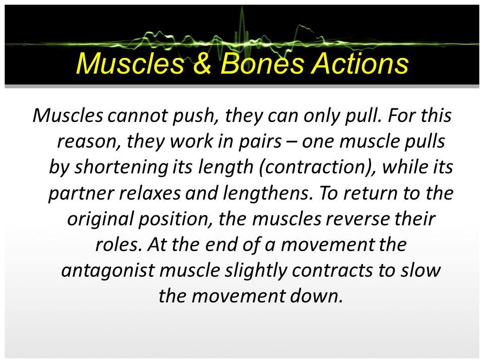 Muscles & Bones Actions