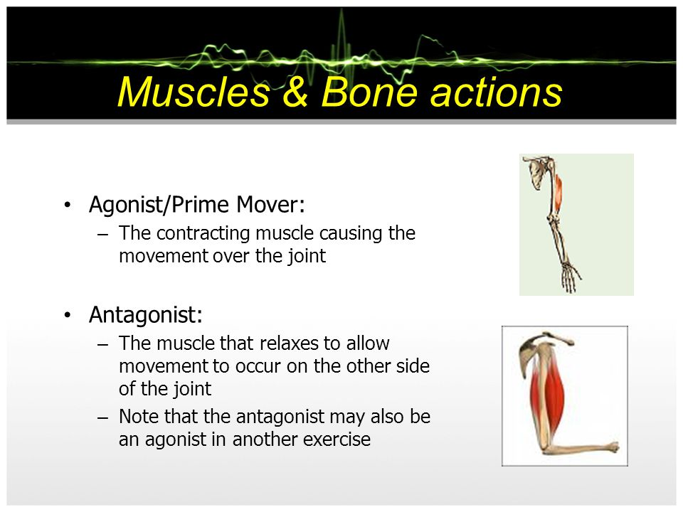 Muscles & Bone actions Agonist/Prime Mover: Antagonist: