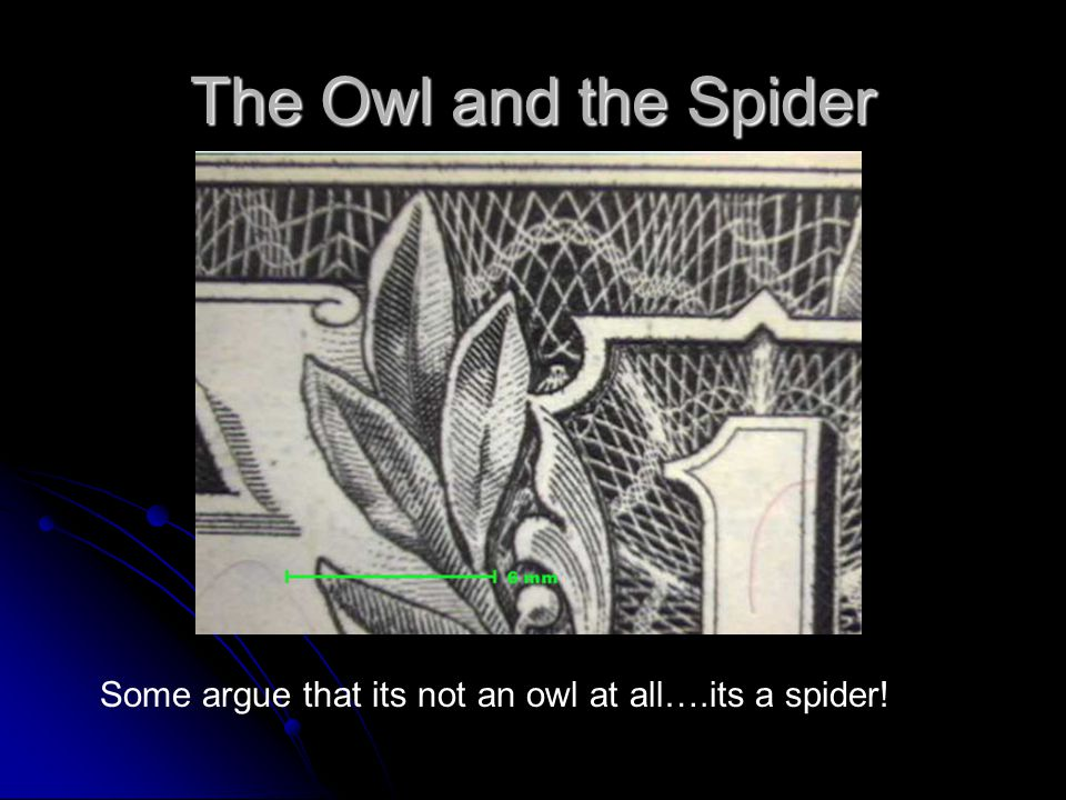 The Owl and the Spider Some argue that its not an owl at all….its a spider!