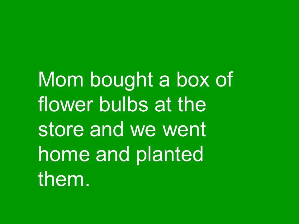 Mom bought a box of flower bulbs at the store and we went home and planted them.