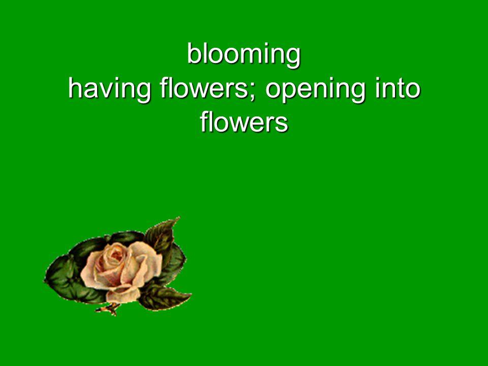 blooming having flowers; opening into flowers