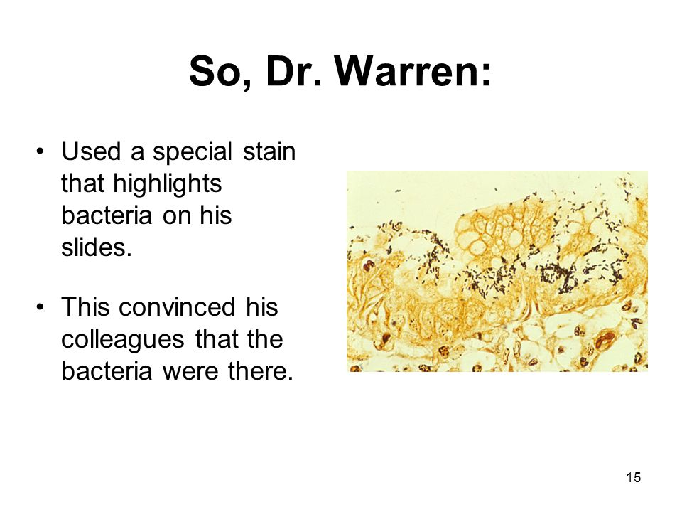 So, Dr. Warren: Used a special stain that highlights bacteria on his slides.