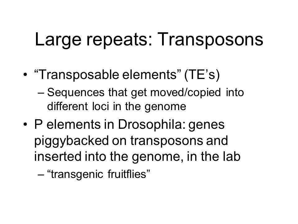 Large repeats: Transposons
