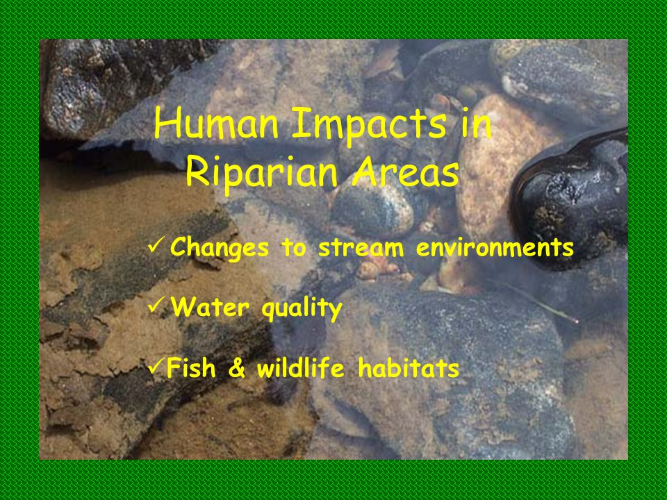 Human Impacts in Riparian Areas