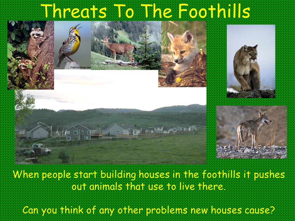 Threats To The Foothills