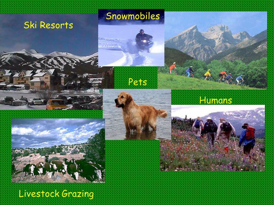 Snowmobiles Ski Resorts Pets Humans Livestock Grazing