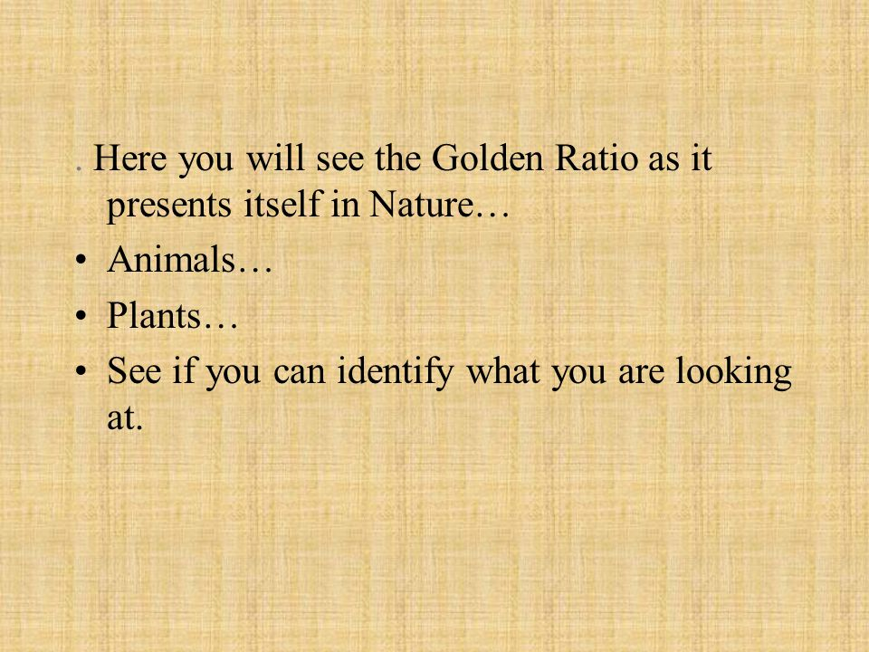. Here you will see the Golden Ratio as it presents itself in Nature…